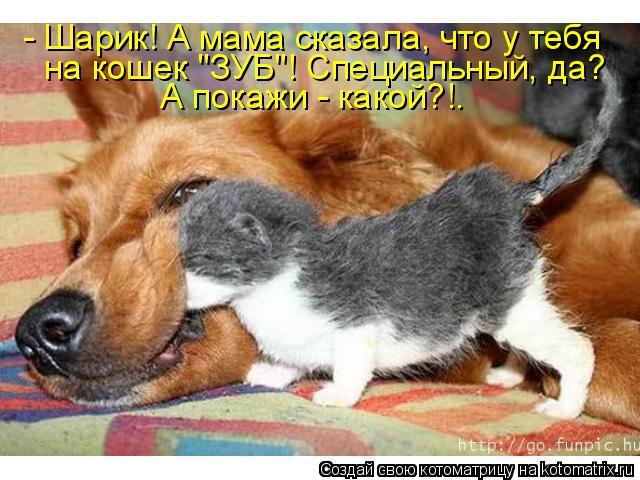 """Котоматрица - - Шарик! А мама сказала, что у тебя на кошек """"ЗУБ""""! Специальный, да? А"""