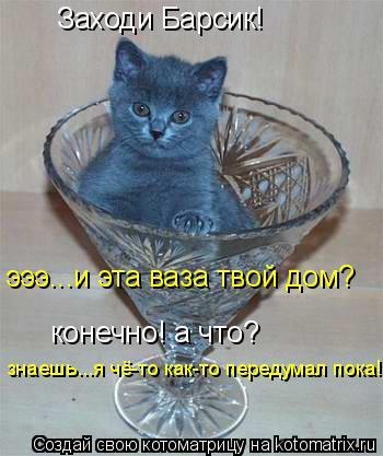 Котоматрица: Заходи Барсик! эээ...и эта ваза твой дом? конечно! а что? знаешь...я чё-то как-то передумал пока!