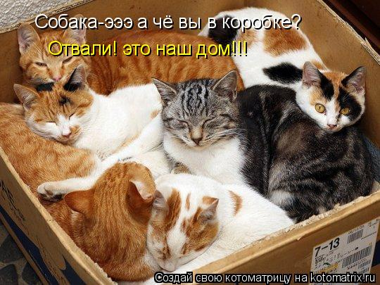 Котоматрица: Собака-эээ а чё вы в коробке? Отвали! это наш дом!!!
