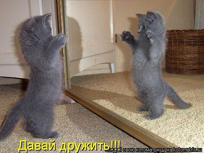 Котоматрица: Давай дружить!!!