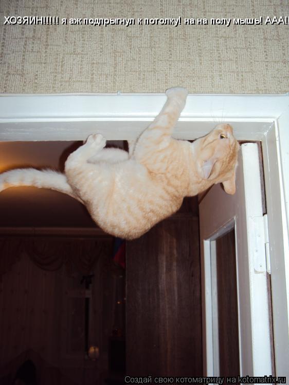Котоматрица: ХОЗЯИН!!!!! я аж подпрыгнул к потолку! на на полу мышь! ААА!!!