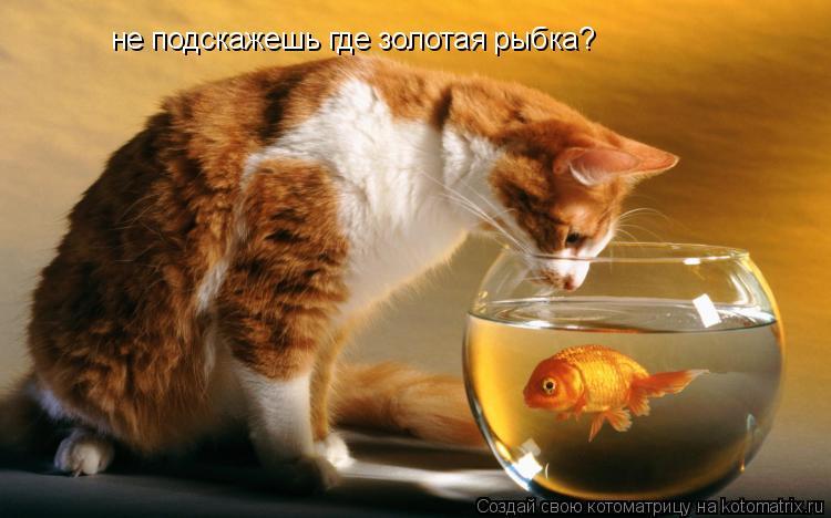 Котоматрица: не подскажешь где золотая рыбка?