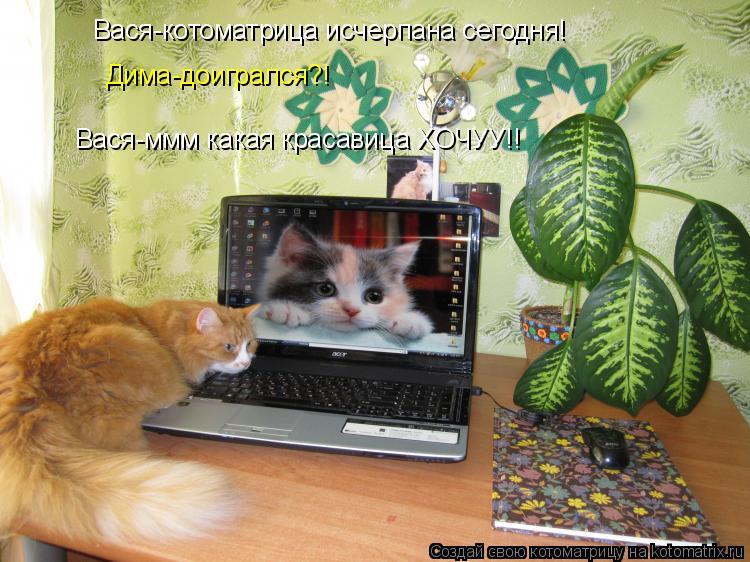Котоматрица: Вася-котоматрица исчерпана сегодня! Дима-доигрался?! Вася-ммм какая красавица ХОЧУУ!!
