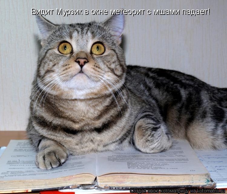 Котоматрица: Видит Мурзик в окне метеорит с мшами падает!