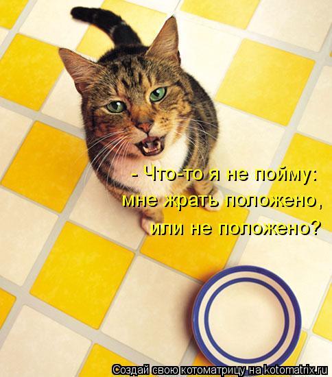 Котоматрица: - Что-то я не пойму: мне жрать положено,  или не положено?