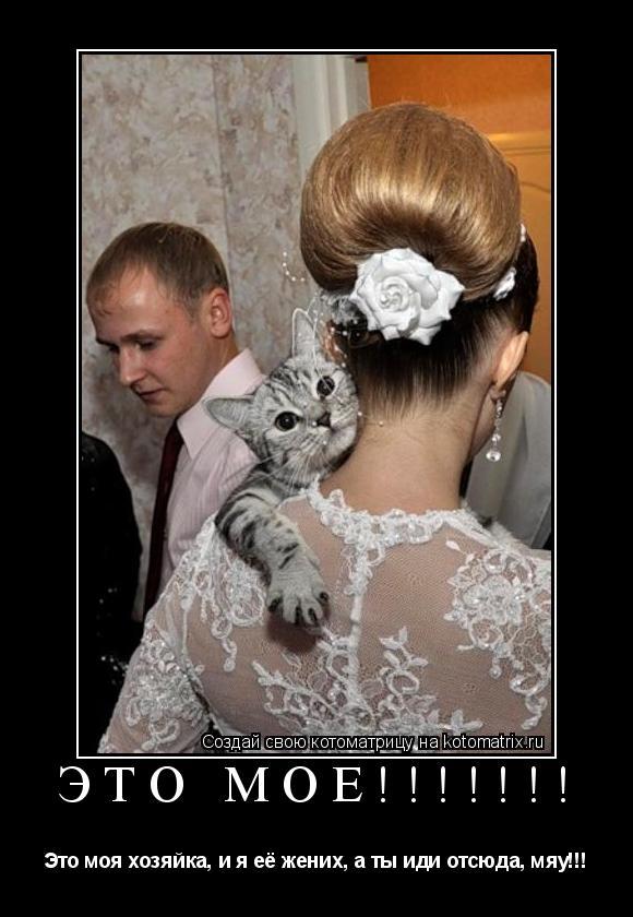 Котоматрица: Это моё!!!!!!! Это моя хозяйка, и я её жених, а ты иди отсюда, мяу!!!
