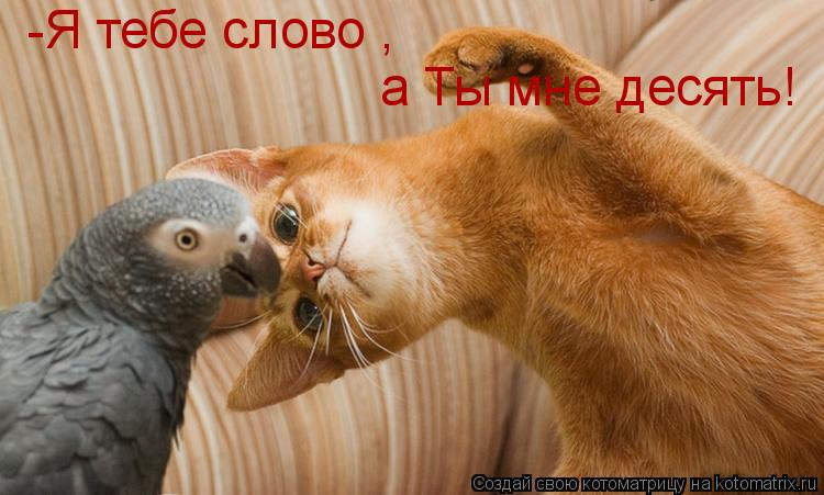 Котоматрица: -Я тебе слово , а Ты мне десять!