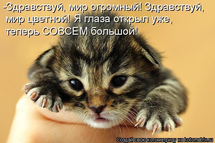 Котоматрица: -Здравствуй, мир огромный! Здравствуй, мир цветной! Я глаза открыл уже,  теперь СОВСЕМ большой!