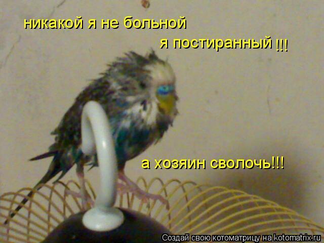 Котоматрица: никакой я не больной я постиранный !!! а хозяин сволочь!!!