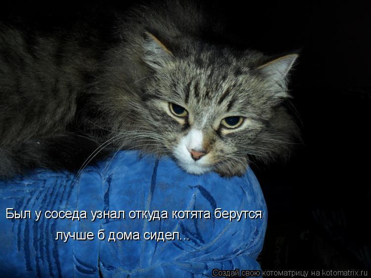Котоматрица: Был у соседа узнал откуда котята берутся лучше б дома сидел...