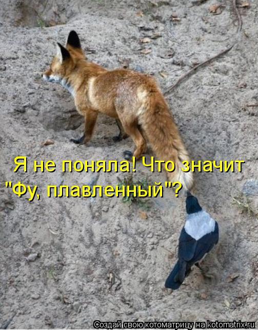 """Котоматрица: Я не поняла! Что значит """"Фу, плавленный""""?"""