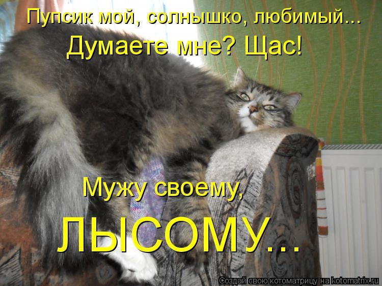 Котоматрица - Пупсик мой, солнышко, любимый... Думаете мне? Щас! Мужу своему,  ЛЫСОМ