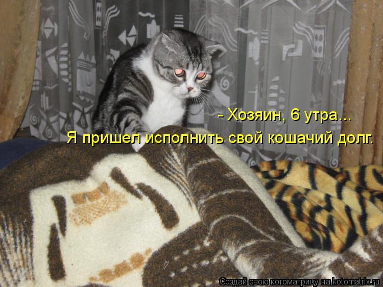 Котоматрица - - Хозяин, 6 утра... Я пришел исполнить свой кошачий долг.