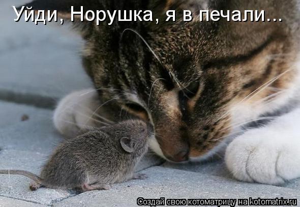 Котоматриця!)))) - Страница 8 987466