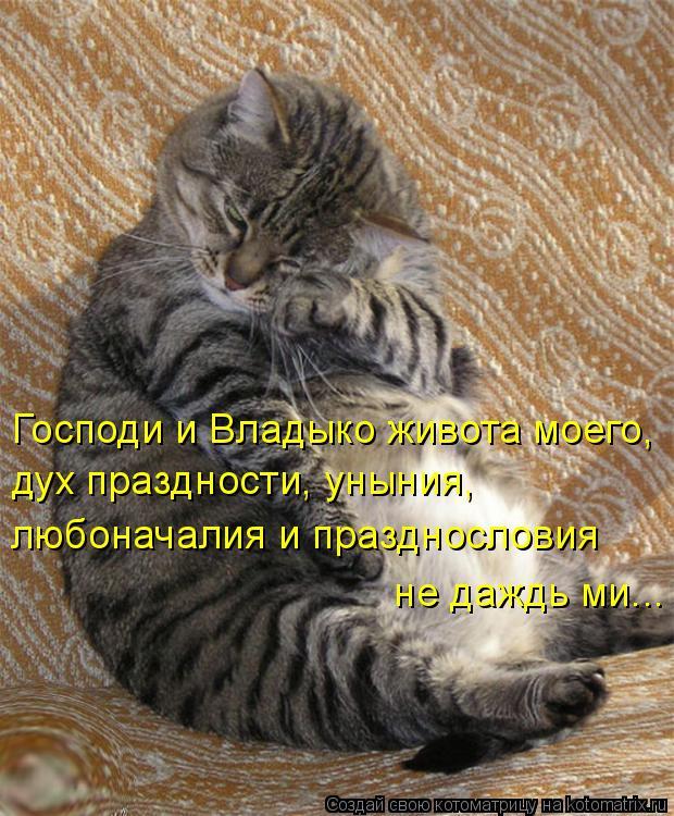 Котоматрица: Господи и Владыко живота моего,  дух праздности, уныния,  любоначалия и празднословия  не даждь ми...