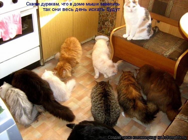 Котоматрица: Скажи дуракам, что в доме мыши завелись так они весь день искать будут
