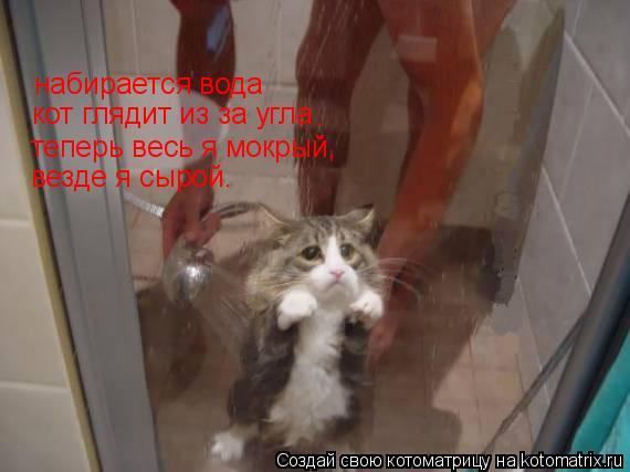 Котоматрица: набирается вода кот глядит из за угла . теперь весь я мокрый, везде я сырой.