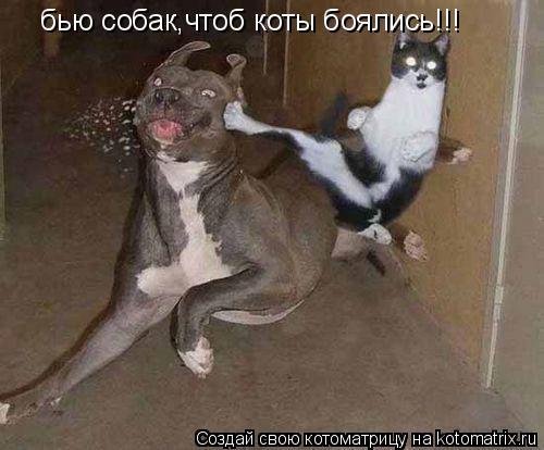 Котоматрица: бью собак,чтоб коты боялись!!!