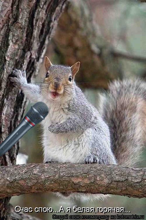 Котоматрица: Счас спою...А я белая,горячая... Счас спою...А я белая,горячая...