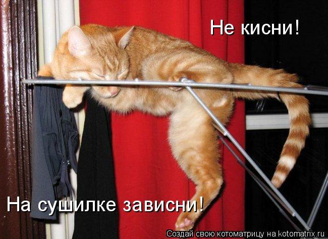 Котоматрица: Не кисни!  На сушилке зависни!