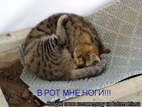 Котоматрица: В РОТ МНЕ НОГИ!!!