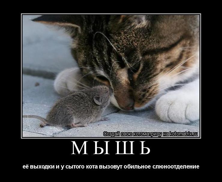Котоматрица: МЫШЬ её выходки и у сытого кота вызовут обильное слюноотделение