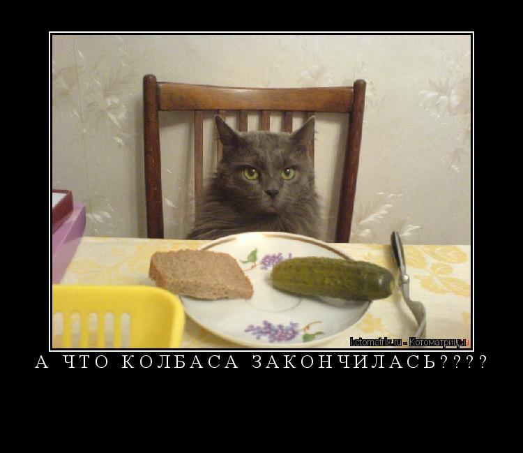 Котоматрица: А что колбаса закончилась????