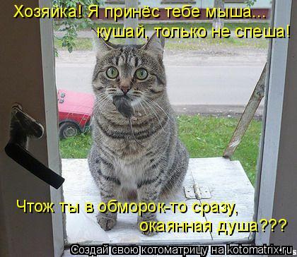 Котоматрица: Хозяйка! Я принёс тебе мыша... кушай, только не спеша! Чтож ты в обморок-то сразу, окаянная душа???