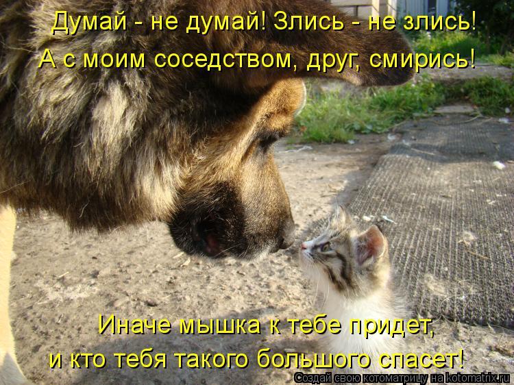 Котоматрица: Думай - не думай! Злись - не злись!  А с моим соседством, друг, смирись!  Иначе мышка к тебе придет,  и кто тебя такого большого спасет!