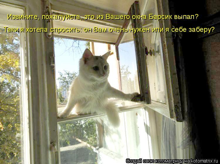 Котоматрица: Извините, пожалуйста, это из Вашего окна Барсик выпал? Таки я хотела спросить: он Вам очень нужен или я себе заберу?