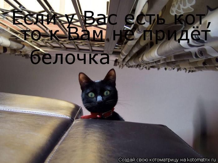 Котоматрица: Если у Вас есть кот,  то к Вам не придёт  белочка