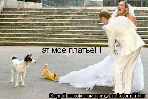 Котоматрица: эт мое платье!!!