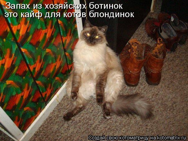 Котоматрица: Запах из хозяйских ботинок  это кайф для котов блондинок