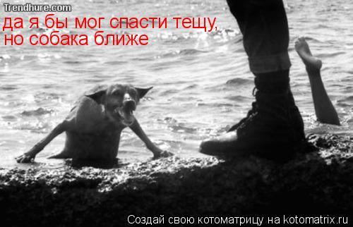 Котоматрица: да я бы мог спасти тещу, но собака ближе