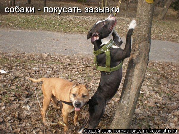 Котоматрица: собаки - покусать зазывки