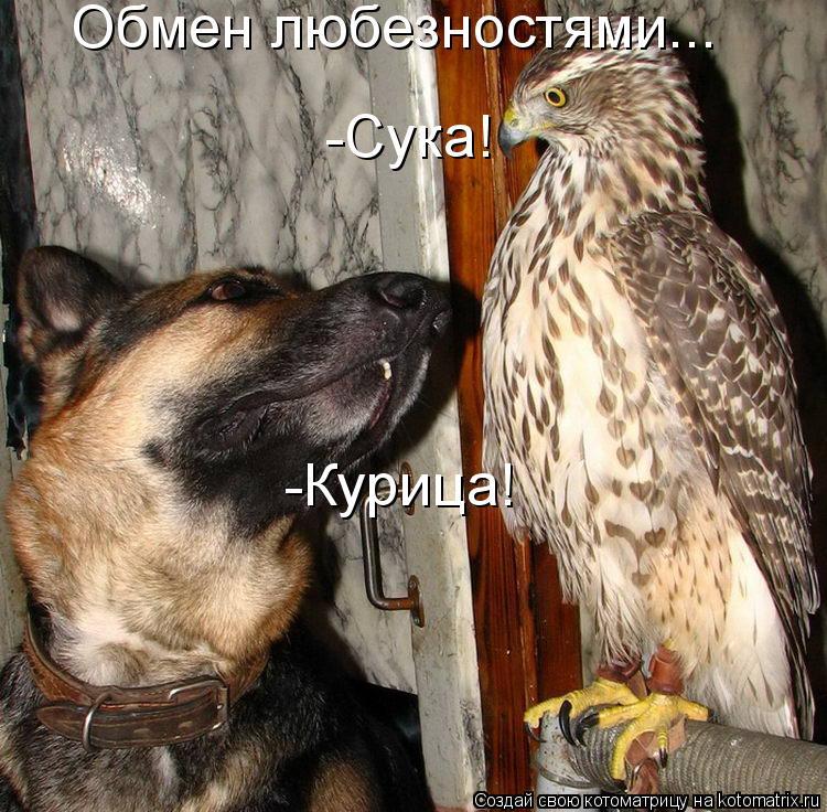 Котоматрица - -Сука! -Курица! Обмен любезностями...