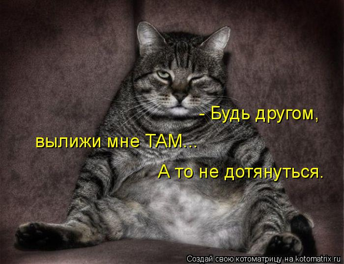 Котоматрица: - Будь другом,  вылижи мне ТАМ... А то не дотянуться.