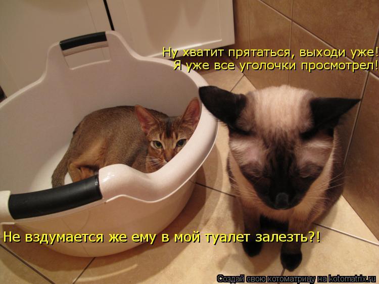 Котоматрица: Ну хватит прятаться, выходи уже! Я уже все уголочки просмотрел! Не вздумается же ему в мой туалет залезть?!