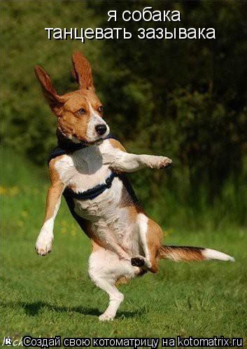 Котоматрица: я собака танцевать зазывака