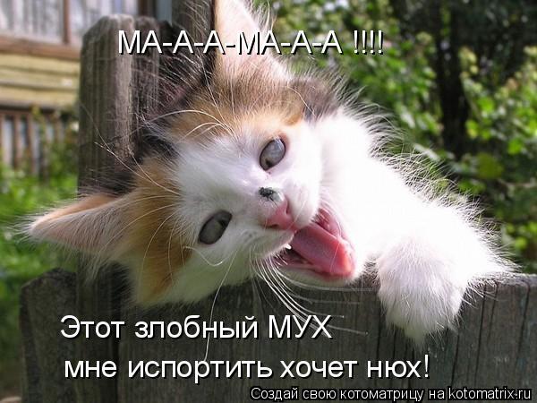 Котоматрица: МА-А-А-МА-А-А !!!! Этот злобный МУХ мне испортить хочет нюх!