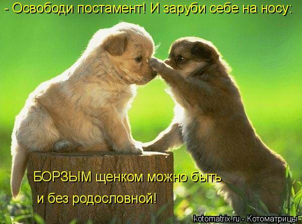 Котоматрица: - Освободи постамент! И заруби себе на носу: БОРЗЫМ щенком можно быть  и без родословной!