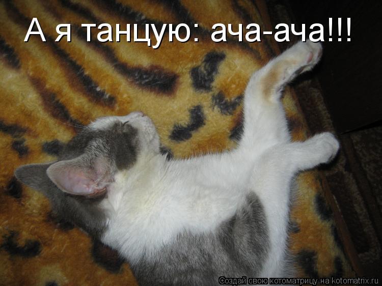 Котоматрица: А я танцую: ача-ача!!!