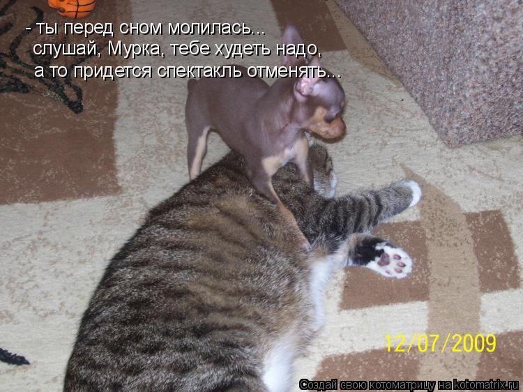 Котоматрица: - ты перед сном молилась...  слушай, Мурка, тебе худеть надо,  а то придется спектакль отменять...