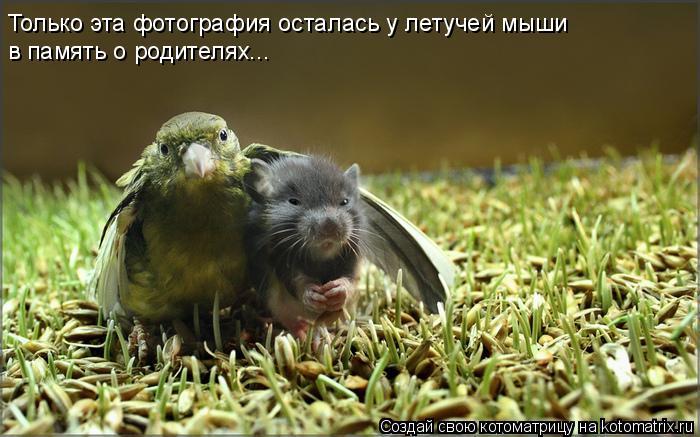 Котоматрица: Только эта фотография осталась у летучей мыши в память о родителях...