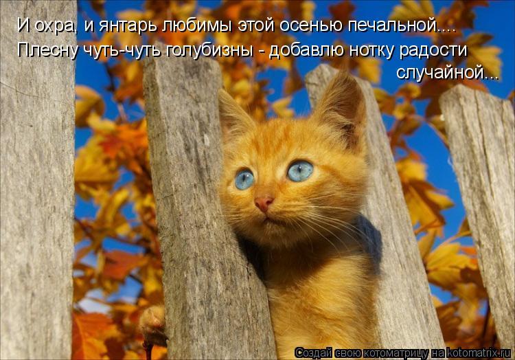 Котоматрица: И охра, и янтарь любимы этой осенью печальной.... Плесну чуть-чуть голубизны - добавлю нотку радости  случайной...