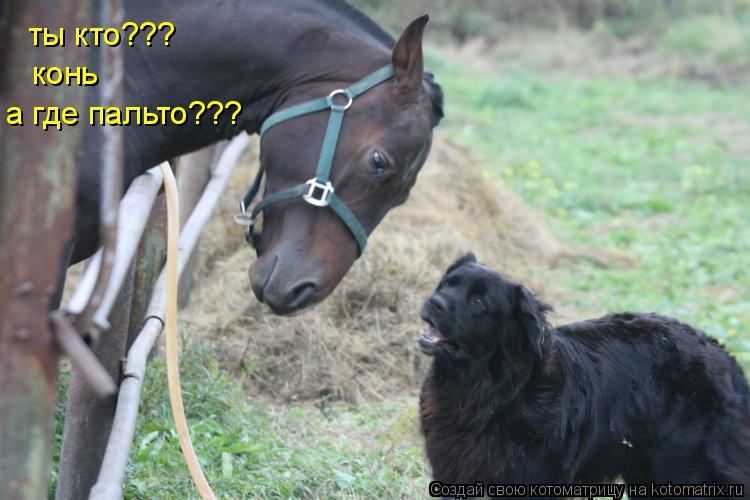Котоматрица: ты кто??? конь а где пальто???