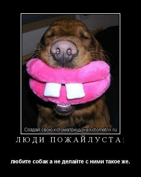 Котоматрица: Люди пожайлуста: любите собак а не делайте с ними такое же.