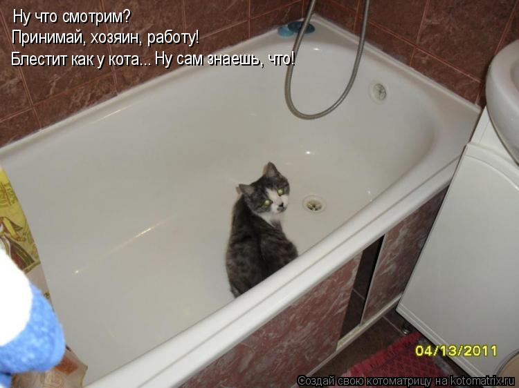 Котоматрица: Ну что смотрим? Принимай, хозяин, работу! Блестит как у кота...  Ну сам знаешь, что!