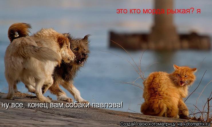 Котоматрица: это кто морда рыжая? я ну все, конец вам,собаки павлова!