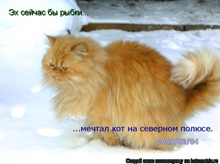 Котоматрица: Эх сейчас бы рыбки... ...мечтал кот на северном полюсе.
